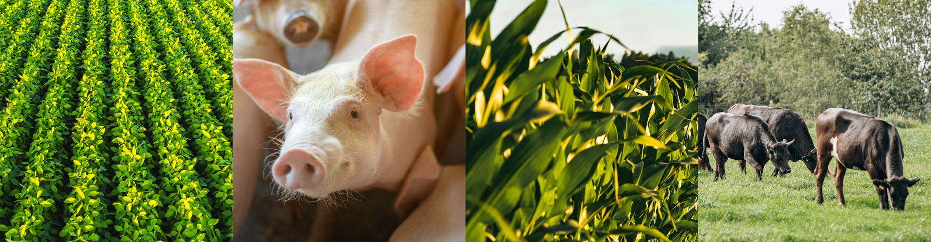 Collage featuring different sectors of production agrigculture